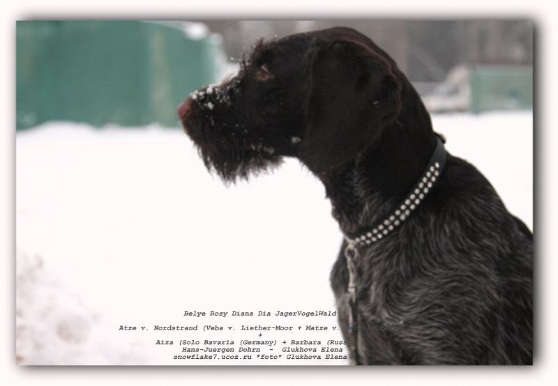 Значение клички Арчи для собаки, Грей и другие