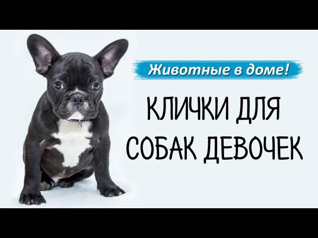 Прикольные клички для собак: необычные имена