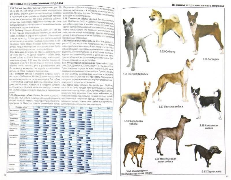 Сколько пород собак существует в мире: точное число