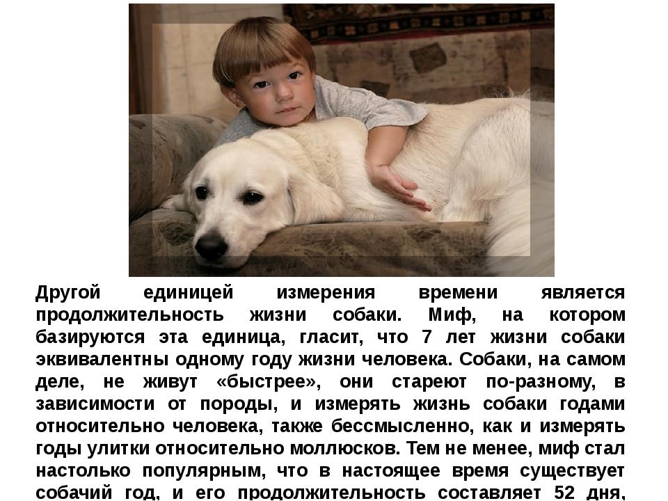 Собачья жизнь: сколько она длится