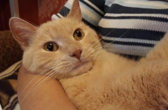Возраст кошек и котов «по-человечески»