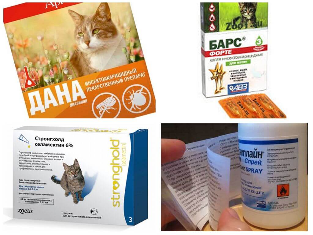 Таблетки от блох для кошек: преимущества и недостатки