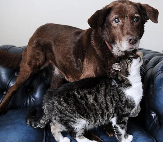 Какую кошку подарить внукам: лучшие породы для детей