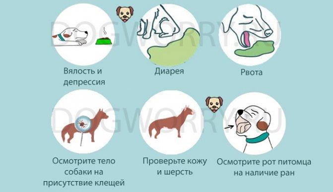 Собака перестала есть и вялая: что делать