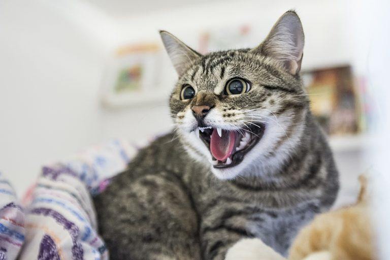 Кот нападает на хозяина: основные причины и варианты что делать