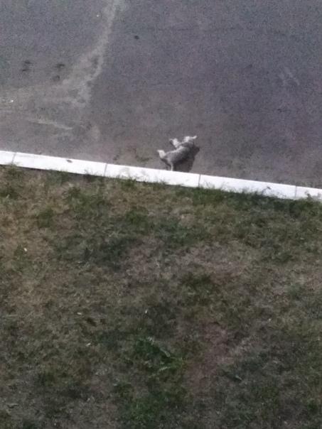 Кот упал с 5 этажа: последствия, что делать