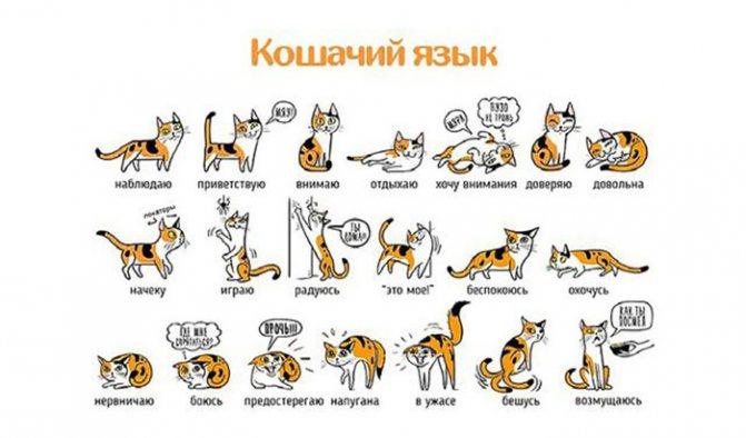 Понимает ли кошка человеческую речь: мифы и реальность