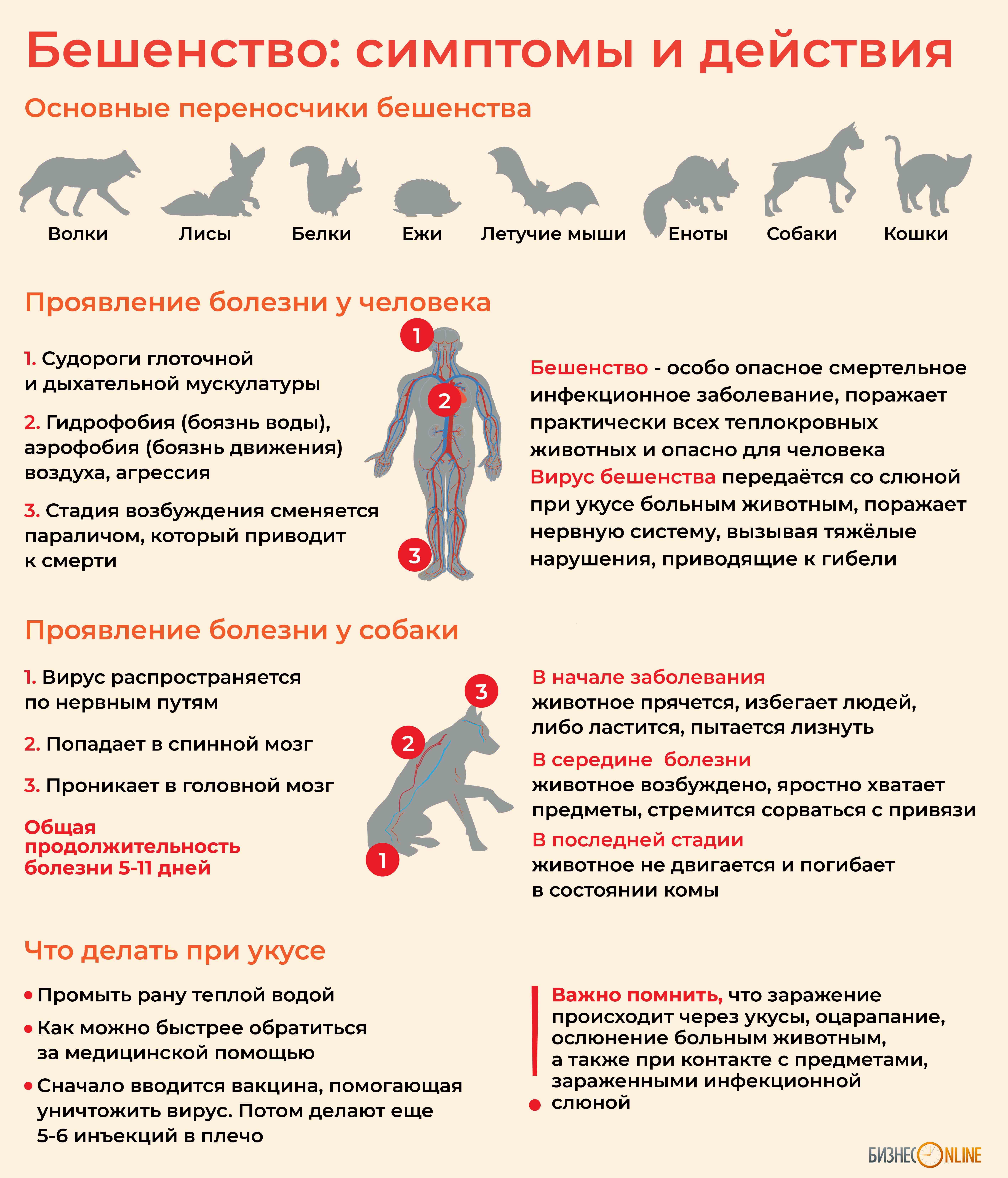 Бешенство у собак: симптомы и лечение