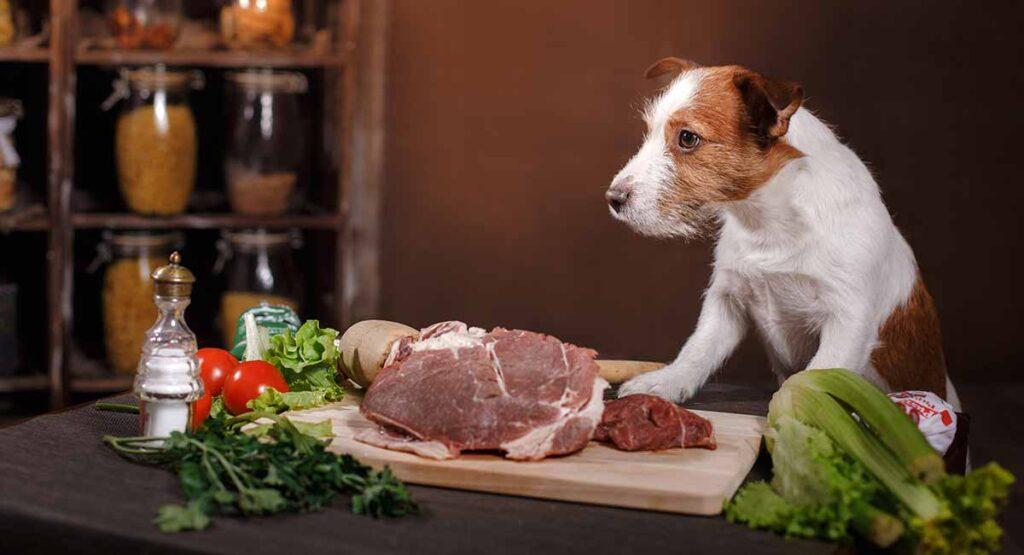 Чем кормить собаку в домашних условиях и как правильно это делать