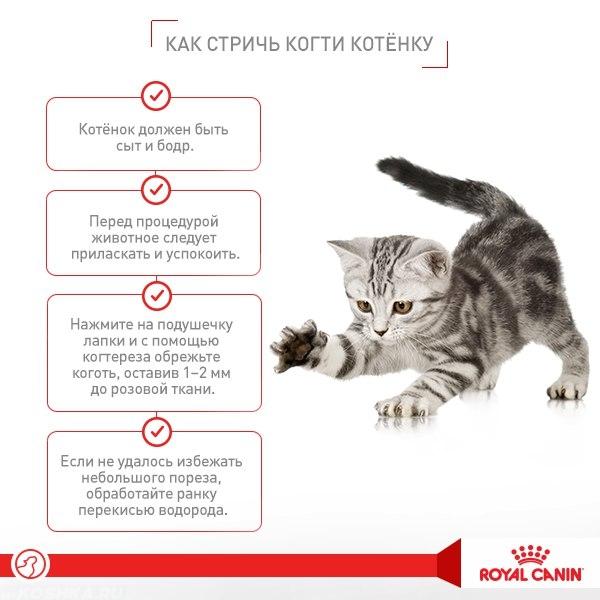 Как приучить кошку к новому дому — обустройство и варианты адаптации питомца