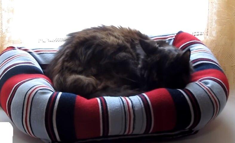 Лежанка для кошек своими руками: как сделать