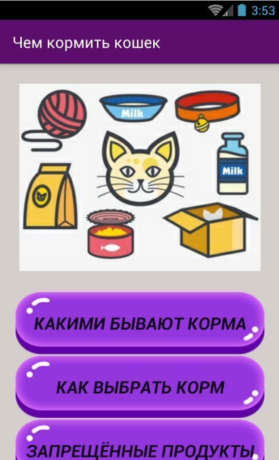 Чем кормить кота в домашних условиях: домашней едой или кормом