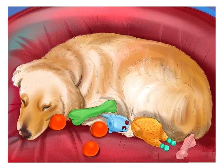 Ложная беременность у собак: что делать, как успокоить