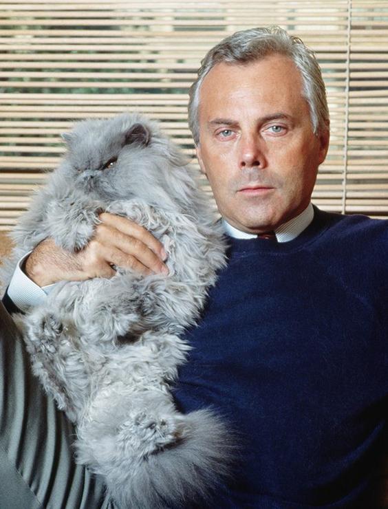Самый известный кот в мире и знаменитые кошки