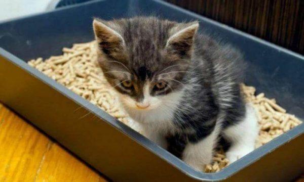 У котенка понос: что делать?