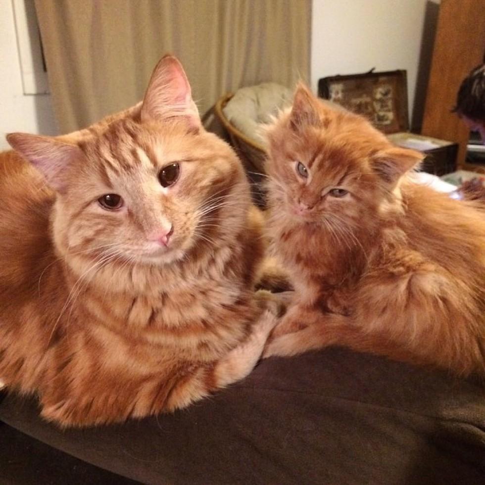 Бывают ли рыжие кошки или только коты