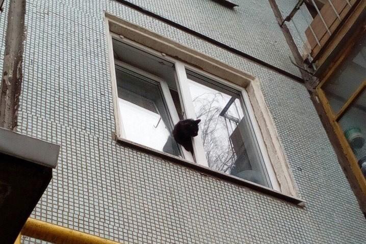 Где искать кошку, которая выпала в окно