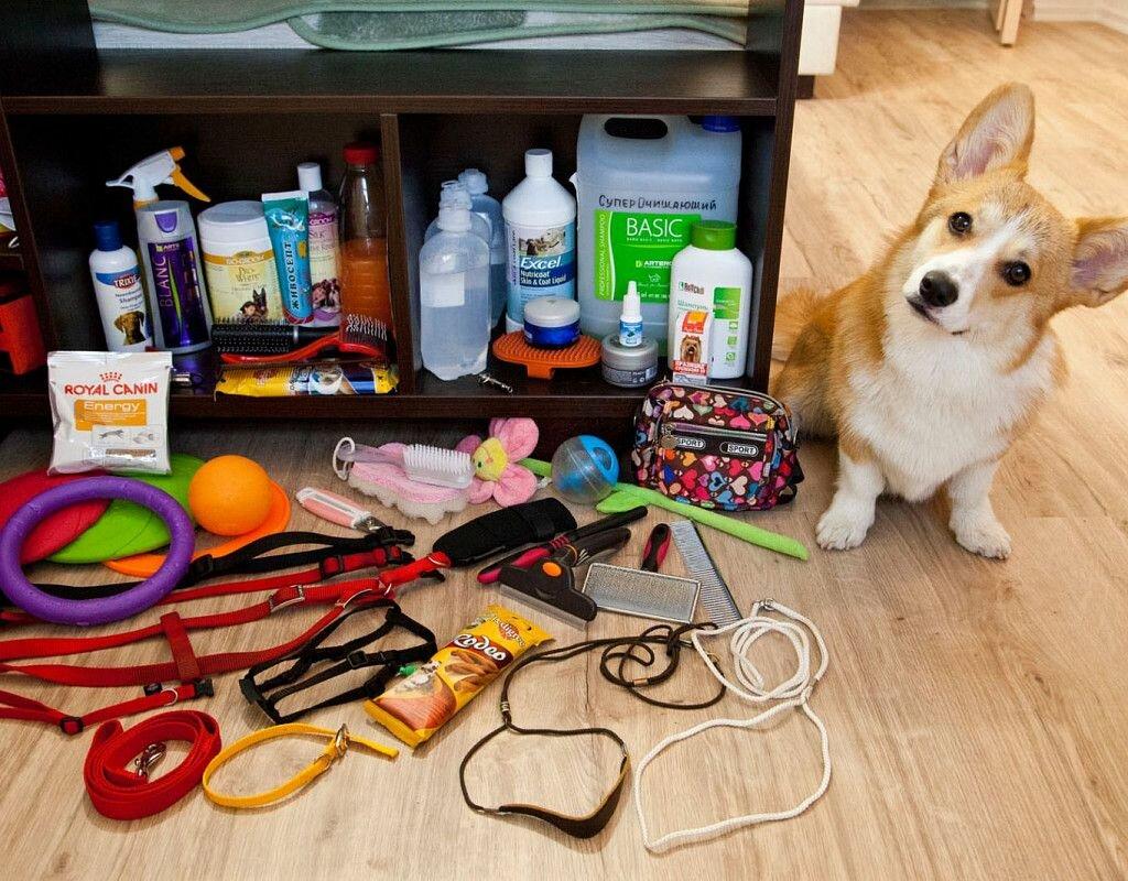 Что нужно для собаки при появления щенка в доме