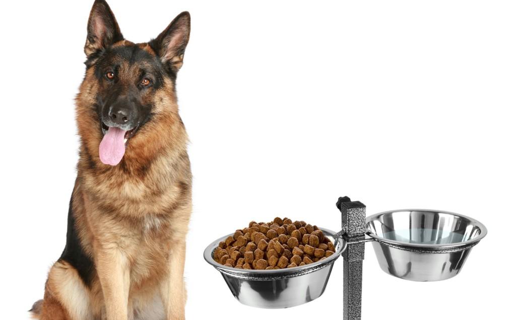 Говяжье легкое для собак: сколько варить и как приготовить
