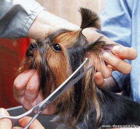 Зачем собаке усы: можно ли стричь их и что будет