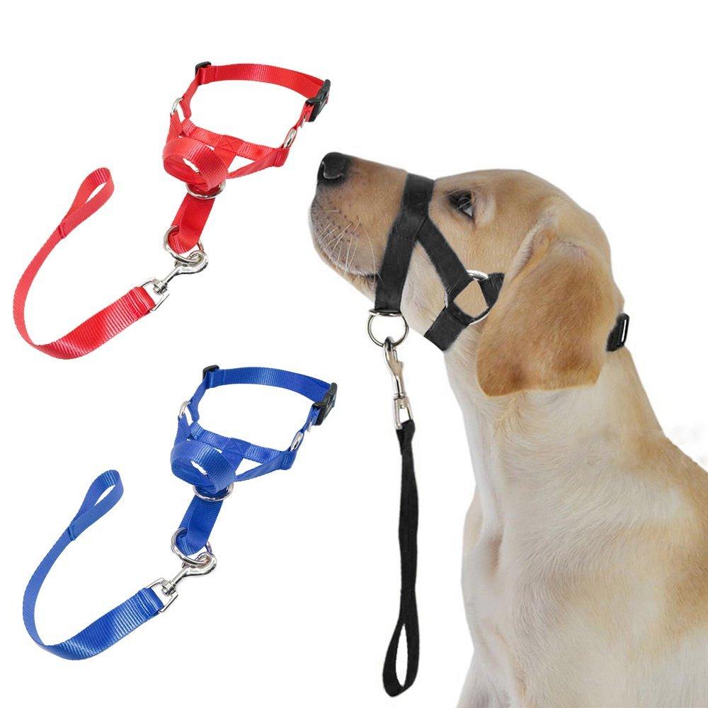 Недоуздок для собак: что это такое и для чего он нужен