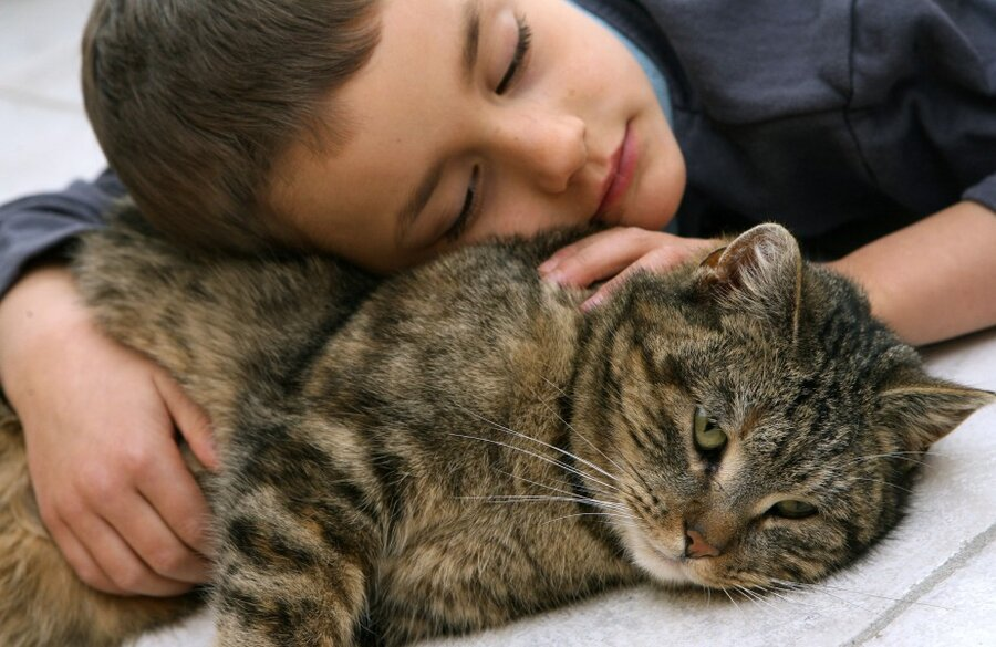 Как понять, что кошка тебя любит — признаки чувств питомца