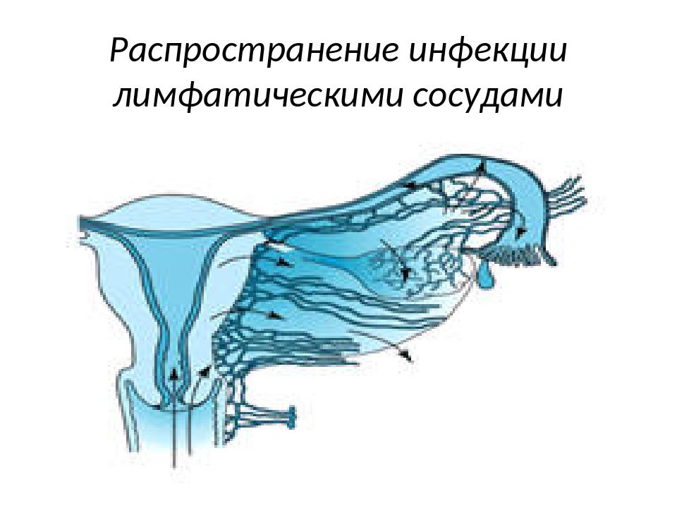 Эклампсия у собаки после родов: симптомы и лечение