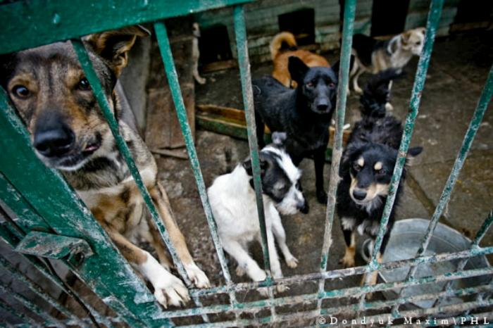 Приют для собак: в каком можно взять щенка