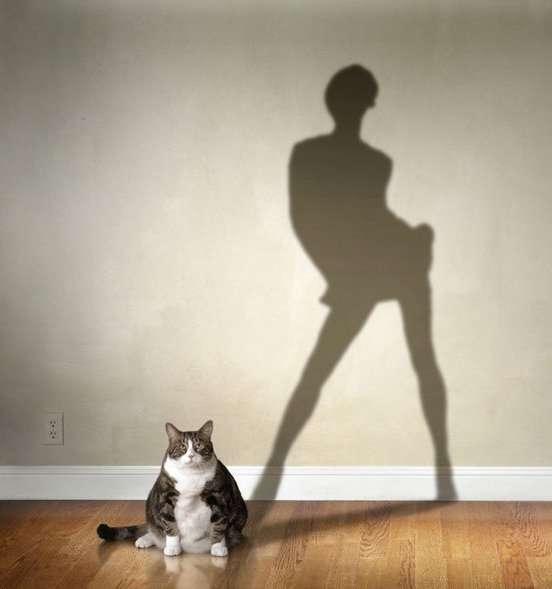 Как кошки воспринимают своих хозяев?