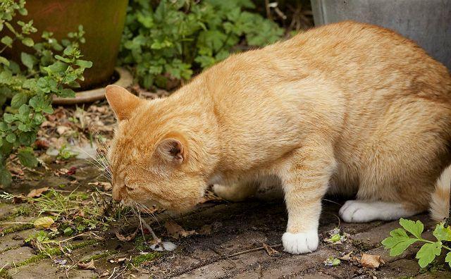 Кошку рвет желтой жидкостью с пеной