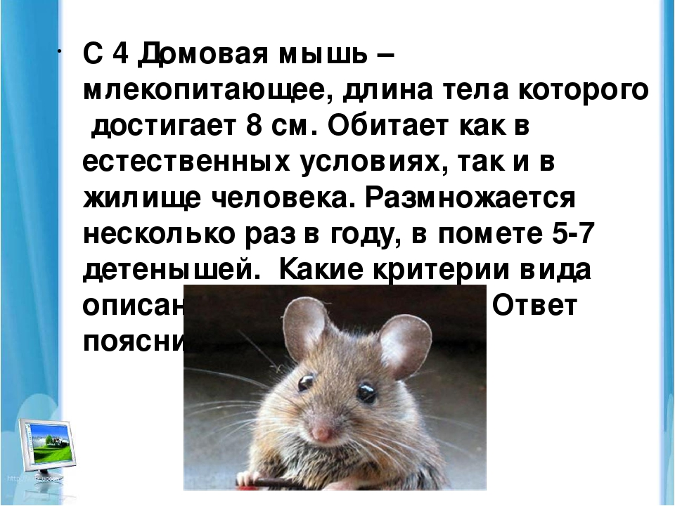 Сколько живут мыши — что влияет положительно