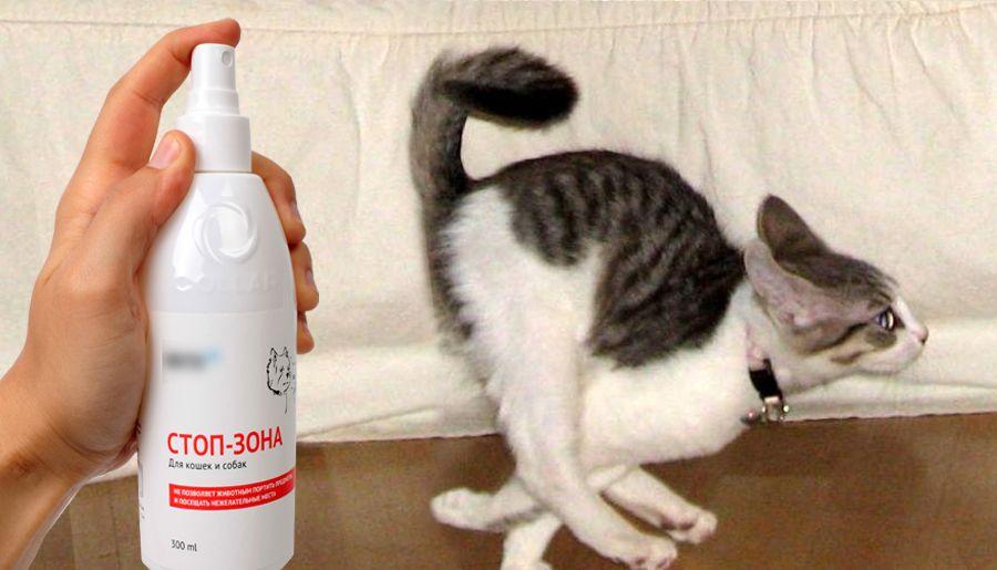 Какие запахи не любят кошки: чего боятся и что их отпугивает