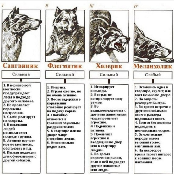 Аргентинский дог: описание породы, характер