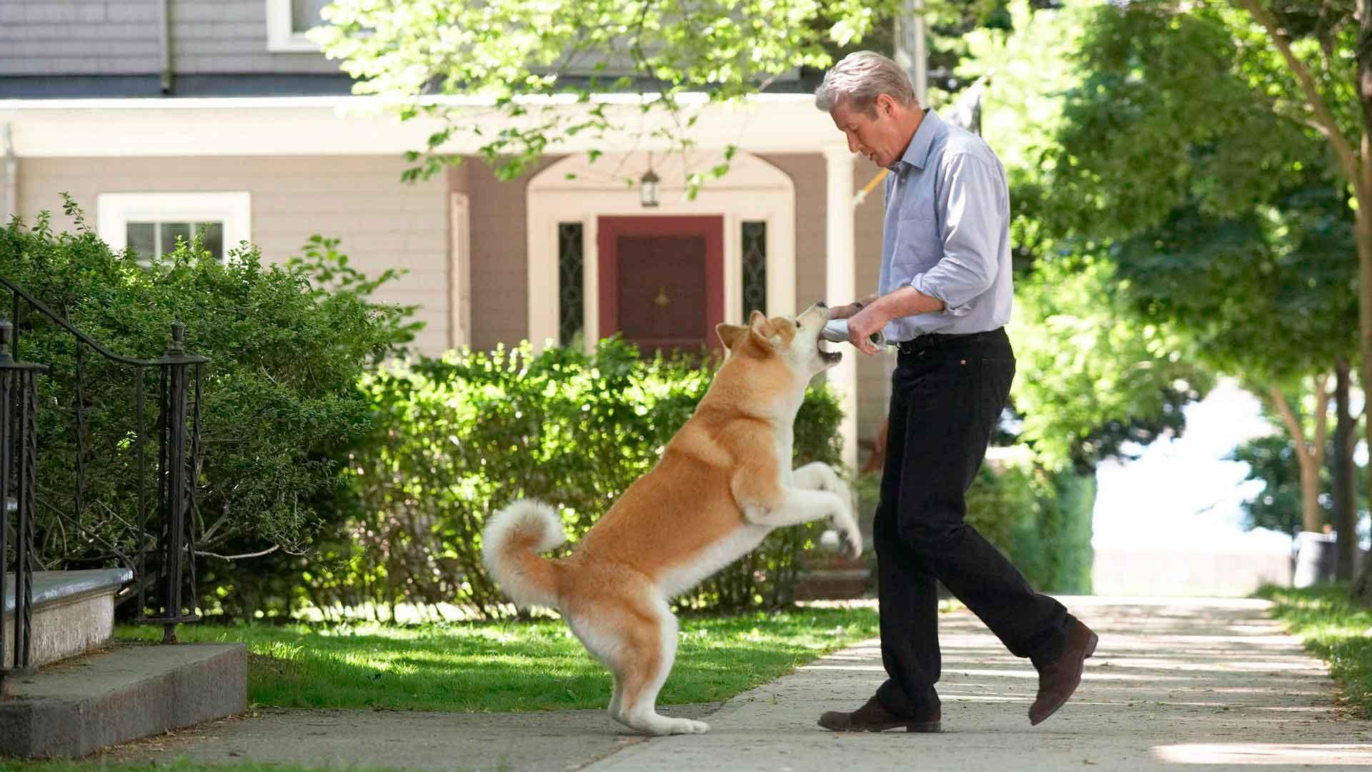 Хатико: порода, как называется собака, которая снималась в фильме