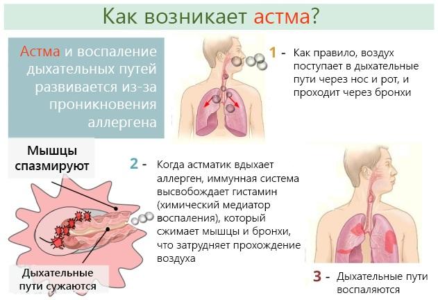 Гангренозный стоматит у кошек: симптомы и лечение