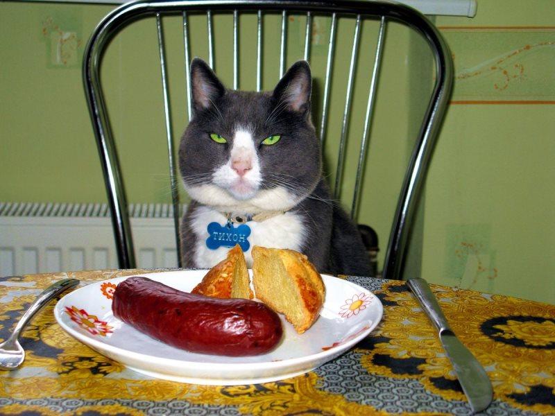 Худой кот: признаки и основные причины истощения