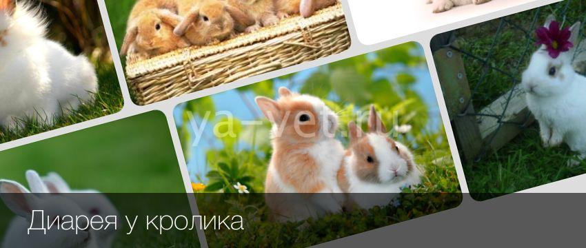 Понос у кролика: что делать хозяину декоративного зверька