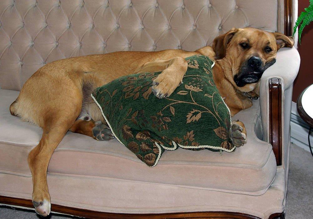 Не друзья человека: 10 пород собак, которым не место в доме
