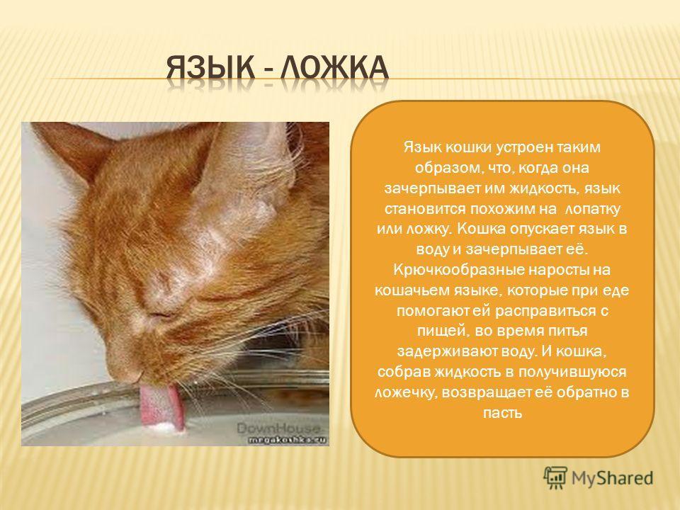 Зачем кошке хвост