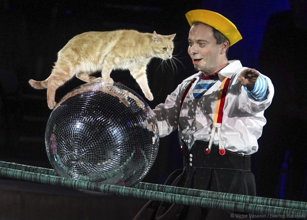 Юрий Куклачев и его кошки: видео