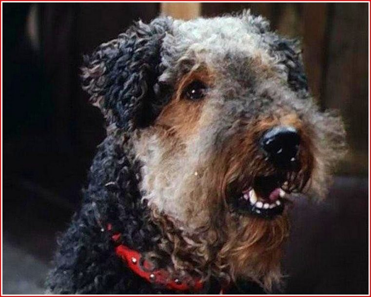 Собака из фильма «Приключения электроника»: порода