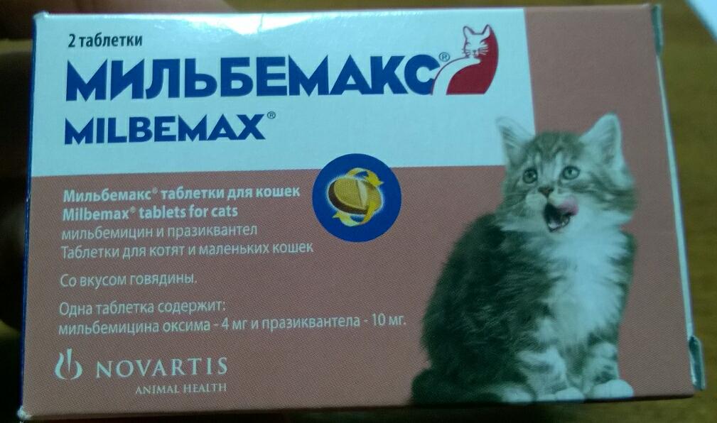 Как проглистогонить кошку в домашних условиях