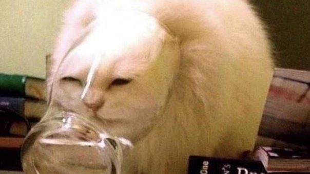 Клички для рыжих котов и кошек
