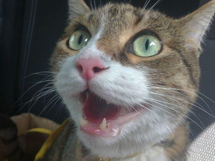 Кот облизывается и сглатывает слюну: основные причины