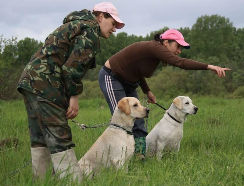 Основные понятия дрессировки домашних собак
