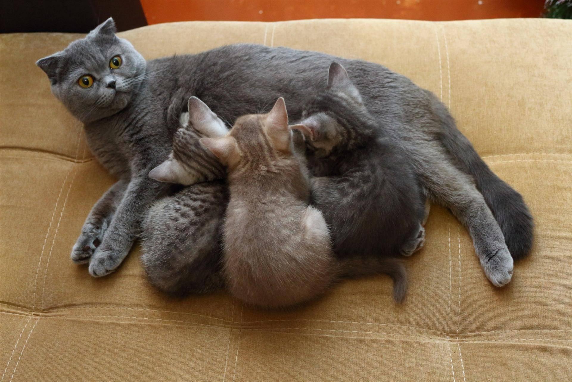 Как назвать серого котенка: примеры красивых имен