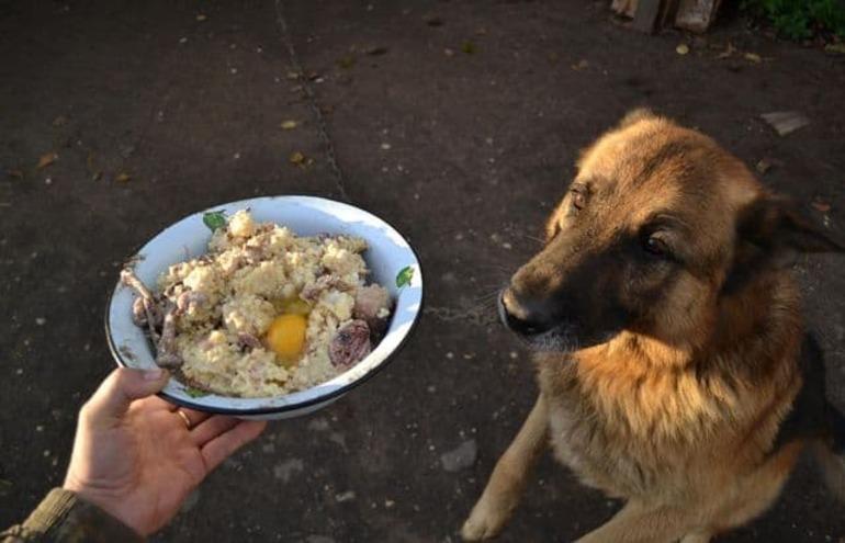 Можно ли кормить собаку сырым мясом или лучше вареным