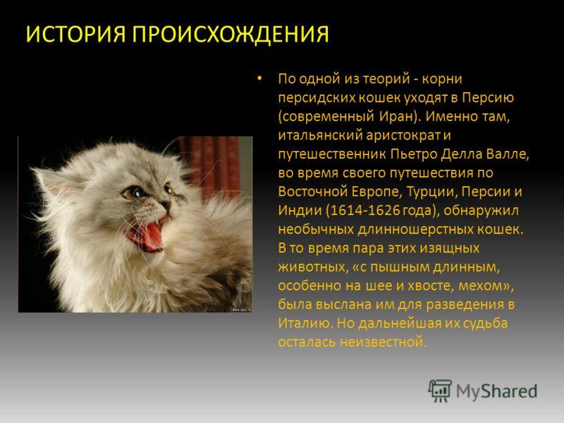 Персидский кот: описание породы и характера, сколько живут