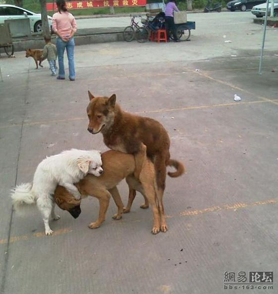 Почему собаки слипаются попами при спаривании