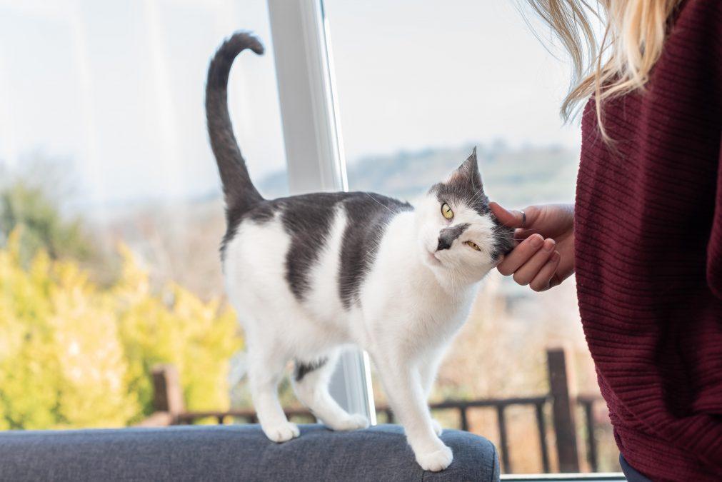 Что делать, если кот метит в квартире?